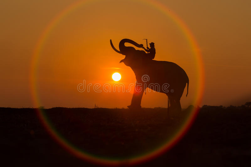 Silhouettez l'éléphant en cercle du soleil C'est une manière de lif photos stock