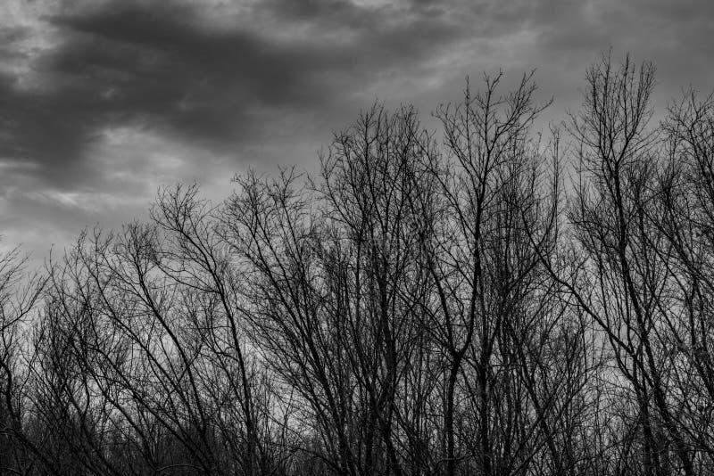 Silhouettez l'arbre mort sur le ciel gris dramatique foncé et opacifiez le fond pour effrayant, la mort, et le concept de paix Jo photos stock