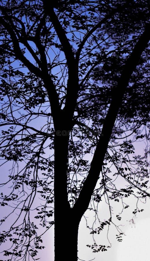 Silhouettez l'arbre pendant le matin de la ville photo stock
