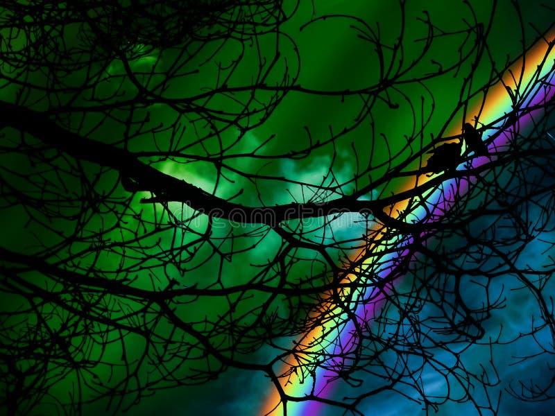 silhouettez l'oiseau jumel sur le ciel nocturne d'arbre et d'aurore images libres de droits