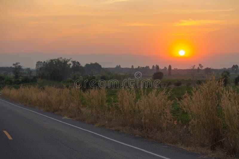 Silhouettez le coucher du soleil du bloc de fleur d'herbe près de la route photo stock