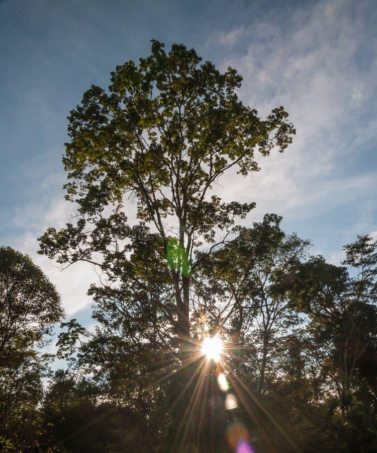 Silhouettez le crépuscule du coucher du soleil de l'atmosphère, vue naturelle des arbres photos stock