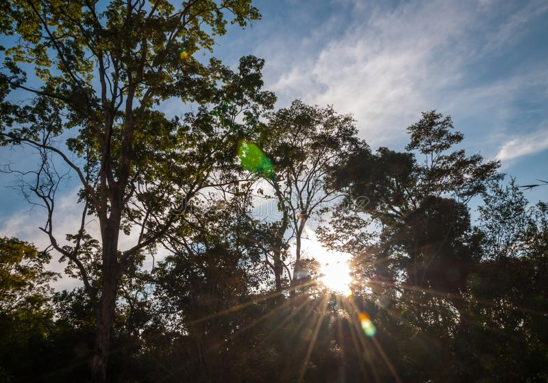 Silhouettez le crépuscule du coucher du soleil de l'atmosphère, vue naturelle des arbres image libre de droits