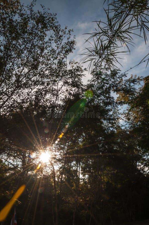 Silhouettez le crépuscule du coucher du soleil de l'atmosphère, vue naturelle des arbres photo stock