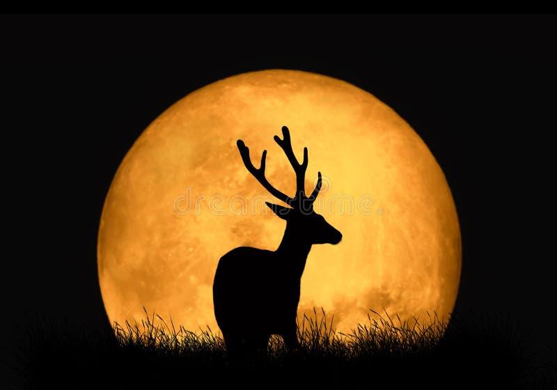 Silhouettez les cerfs communs sur le fond de la lune rouge image stock