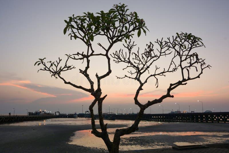 Silhouettieren Sie Baum mit Dämmerungshimmel am Küstenfährenpier stockfotos
