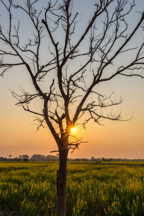 Silhouettieren Sie blattlosen Baum bei Sonnenuntergang mit orange Himmel im Hintergrund lizenzfreies stockfoto
