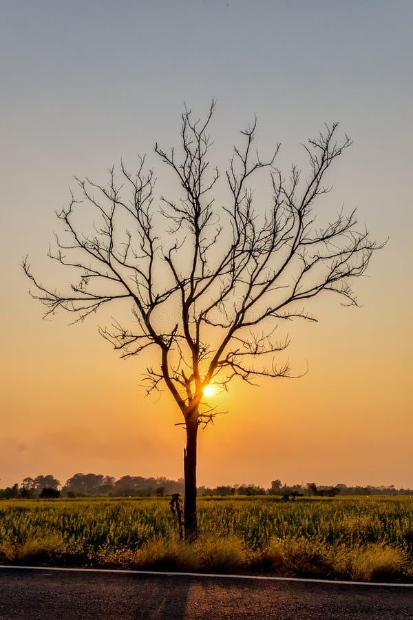 Silhouettieren Sie blattlosen Baum bei Sonnenuntergang mit orange Himmel im Hintergrund lizenzfreies stockbild