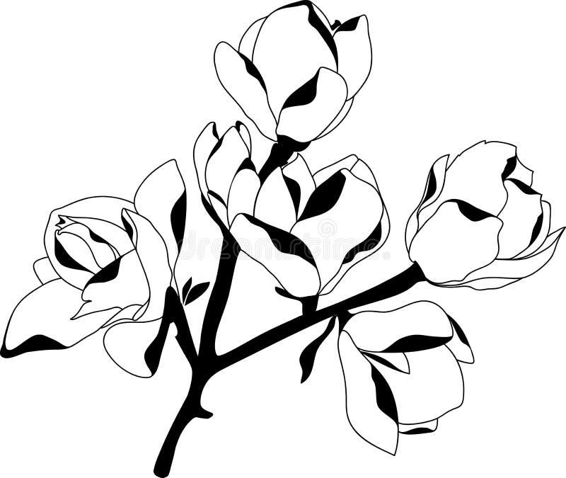 Silhouettieren Sie die blühende Magnolie, die auf weißem Hintergrund schwarz ist vektor abbildung