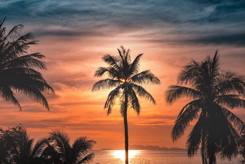 Silhouettieren Sie KokosnussPalmen auf Strand bei Sonnenuntergang stockfotografie