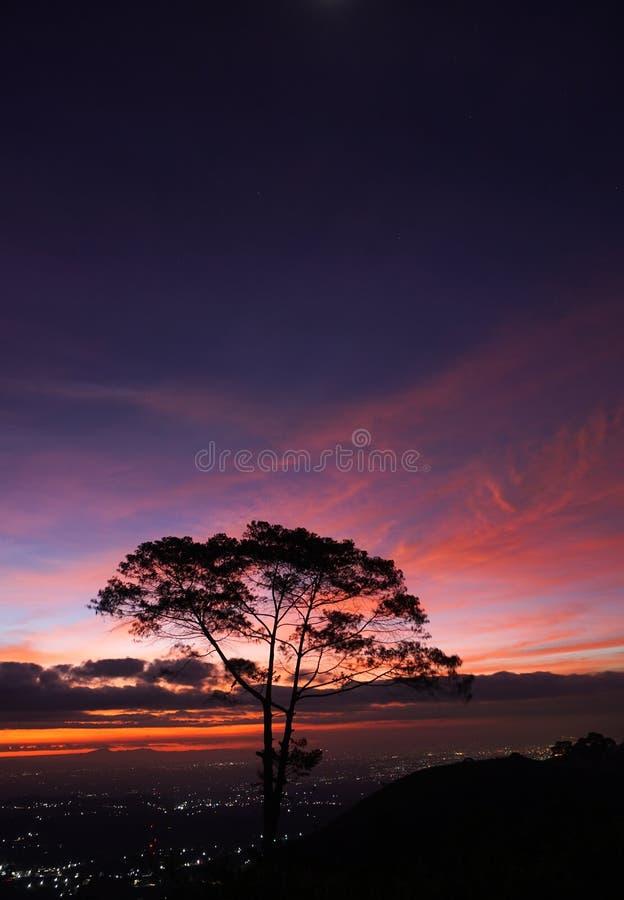 Silhouettieren Sie Sonnenuntergang im Hügel mit Baum und im Licht der Stadt stockfoto