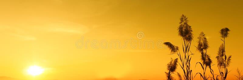 Silhouettieren Sie Sonnenuntergang und gelbe Himmeltapete, Hintergrund stockfotografie