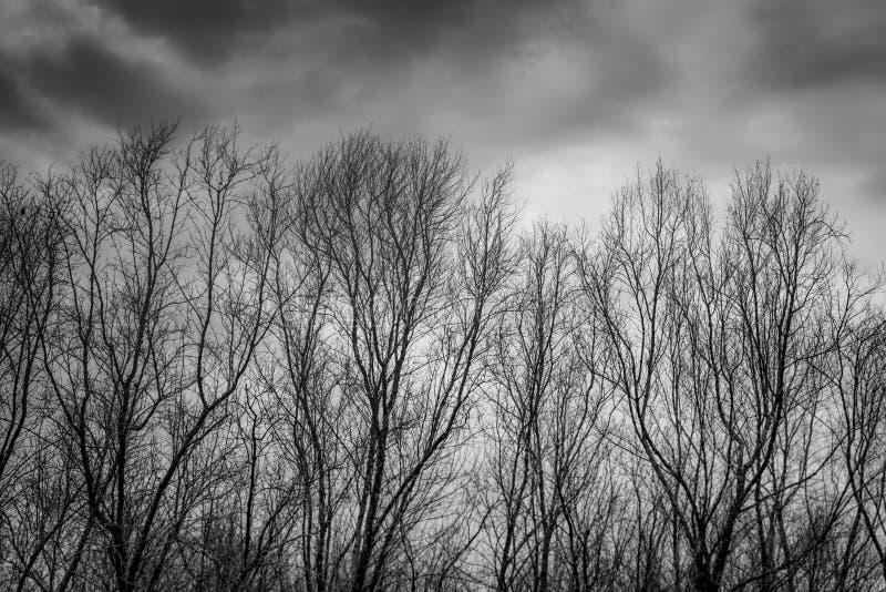 Silhouettieren Sie toten Baum auf dunklem drastischem grauem Himmel und bewölkt Hintergrund für furchtsames, Tod und Friedenskonz lizenzfreies stockfoto