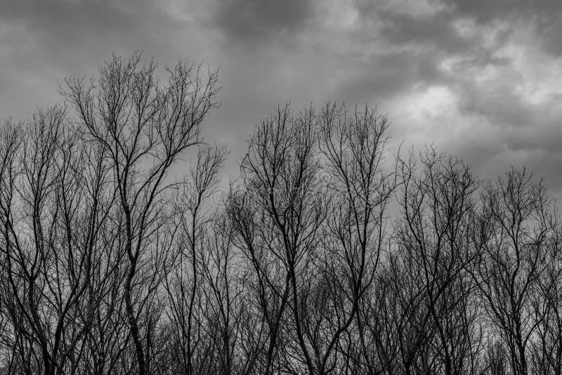 Silhouettieren Sie toten Baum auf dunklem drastischem grauem Himmel und bewölkt Hintergrund für furchtsames, Tod und Friedenskonz stockfotografie