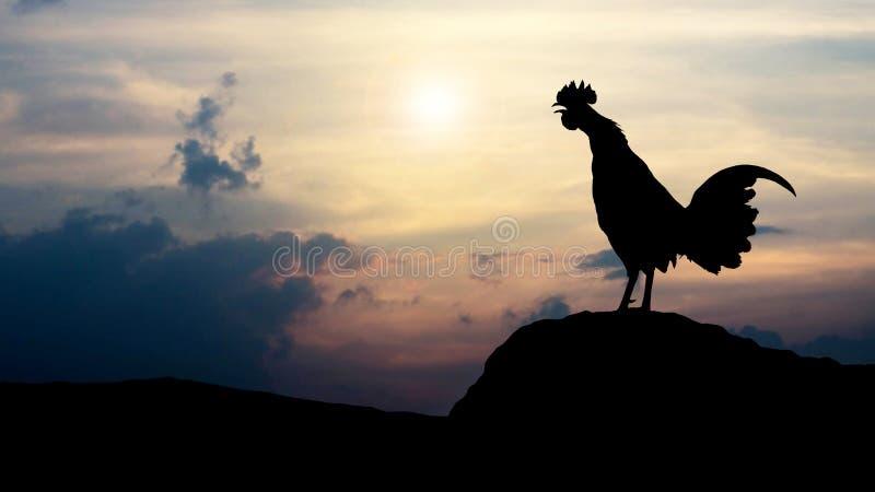 Silhouettiert Hahnkrähen morgens stockfotografie