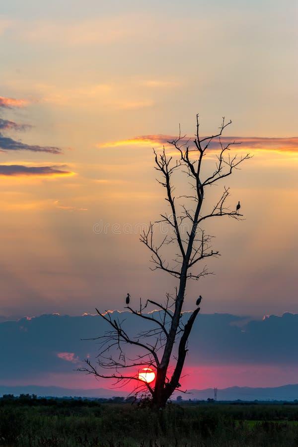 Silhouetts van ooievaars op gebrande boom wachtende nacht royalty-vrije stock afbeeldingen