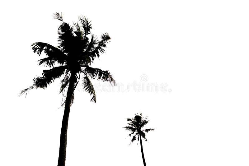 Silhoulette des palmiers image stock