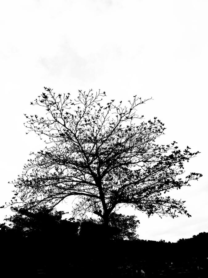 Silhoute av ett träd arkivfoto