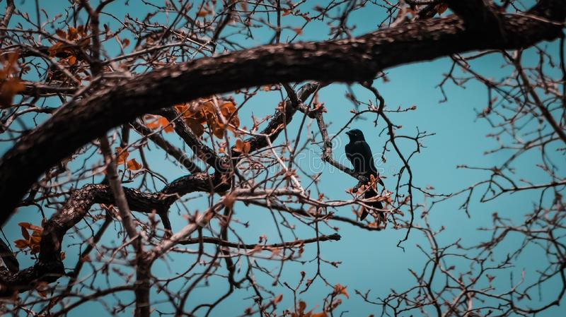 Silhoute Of Bird. Shot on Sony alpha royalty free stock images