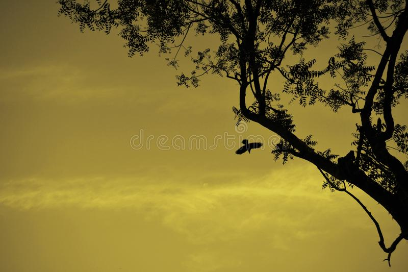 Silhoutee view of the bird taking off from the tree stock photography