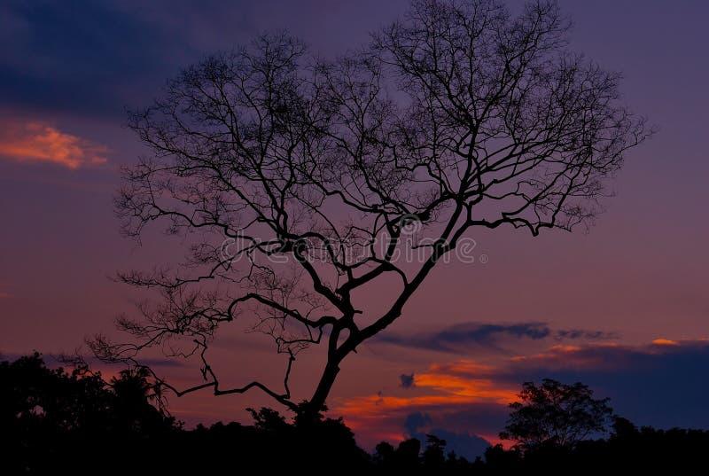 Silhoutte d'arbre avec la scène de coucher du soleil photo libre de droits