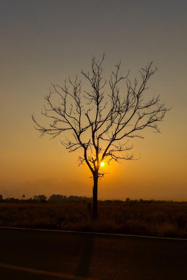 Silhoutte d'arbre et d'îles solitaires au lever de soleil image stock