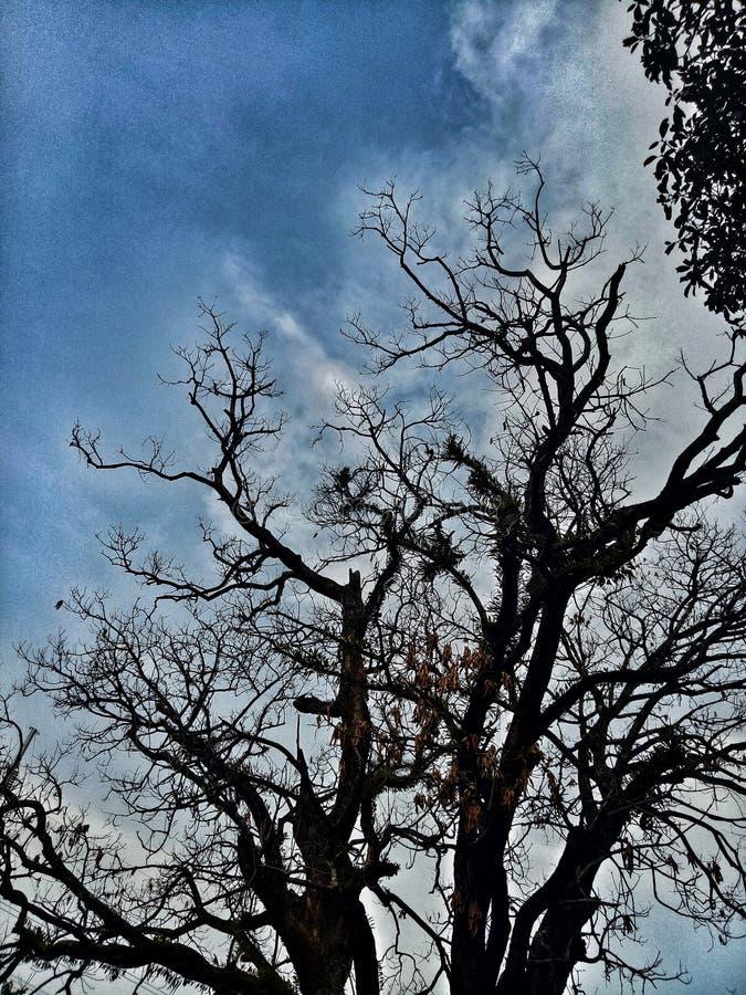 Silhoutte d'un arbre image libre de droits