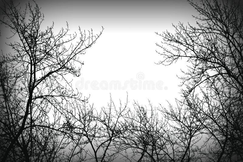 Silhoutte da árvore do mistério fotos de stock royalty free
