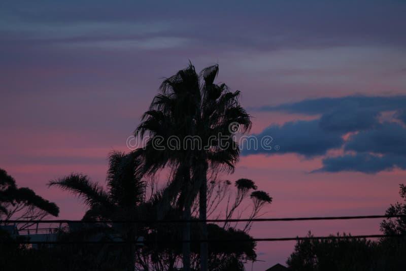 Silhoutte de la palmera en la puesta del sol fotos de archivo