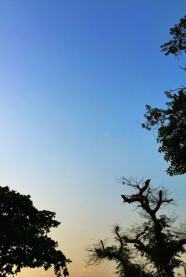 Silhoutte degli alberi immagini stock libere da diritti