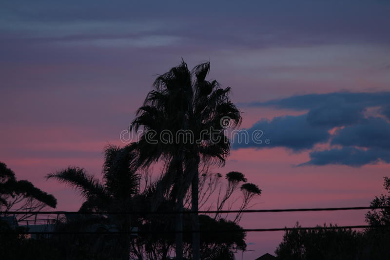 Silhoutte della palma al tramonto fotografie stock