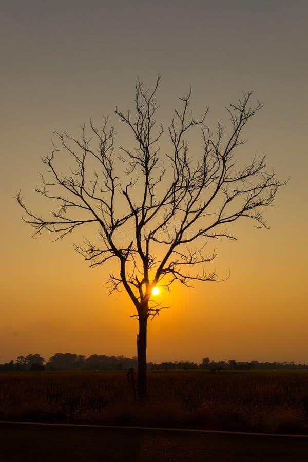 Silhoutte des einzigen Baums und der Inseln stockbilder
