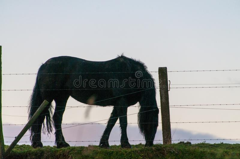Silhoutte of a Horse royalty free stock photography