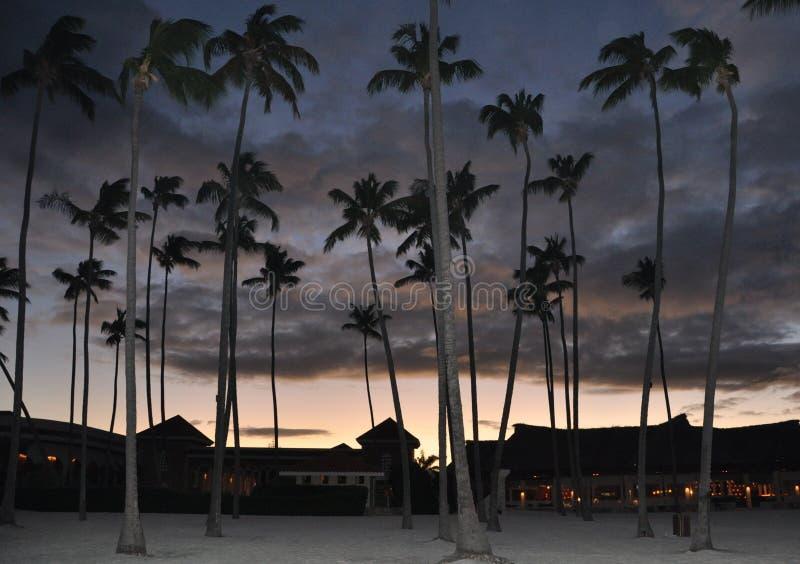 Silhoutte kokosowi drzewa fotografia royalty free