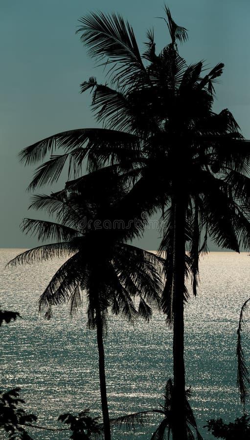 Silhoutte palma zdjęcie royalty free