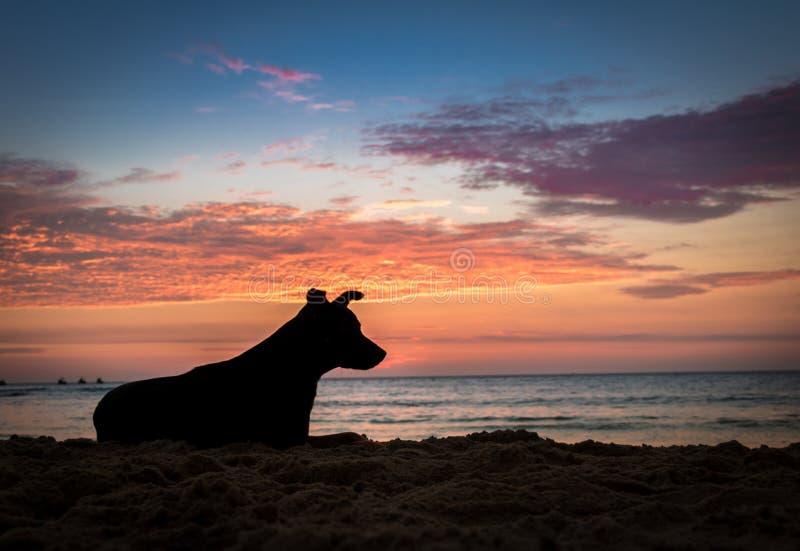 Silhoutte van een hond bij zonsondergang op een strand stock afbeelding