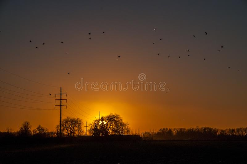 Birds flocking around a power line. Silhouttes of birds are flocking around a powerline that runs through the east-flemish country side. Backlit image of a stock images