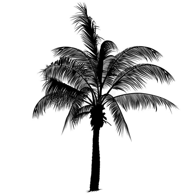 Silhueta 2 da palmeira ilustração stock