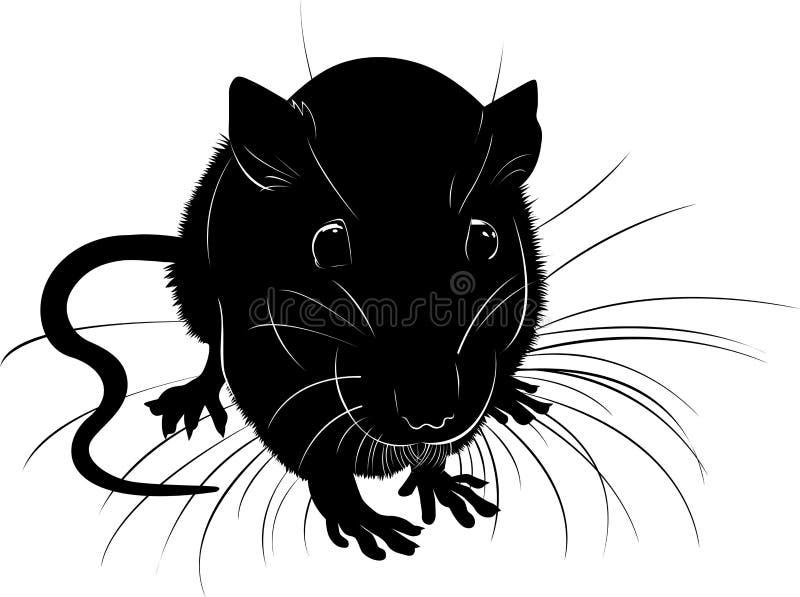 Silhueta animal do preto do vetor dos ratos em um fundo branco