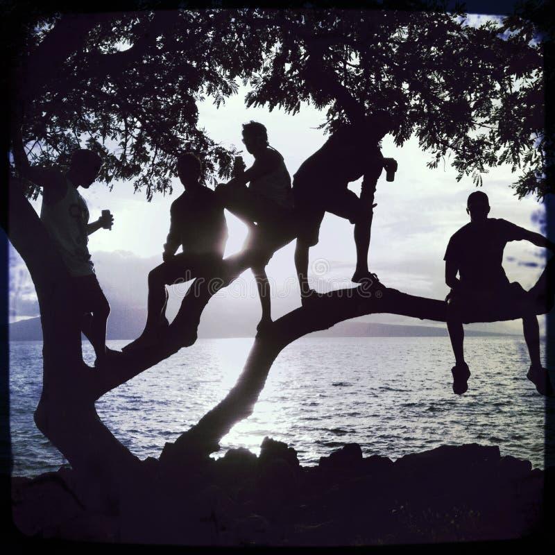 Silhueta beira-mar do por do sol de 5 indivíduos em uma árvore fotos de stock