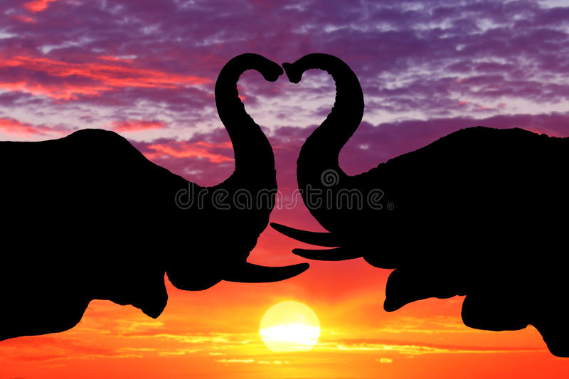 Silhueta bonita de elefantes africanos no por do sol ilustração stock