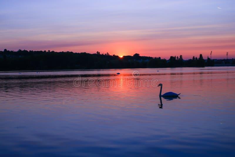 Silhueta bonita de uma cisne na frente de um por do sol sobre o horizonte com monte e floresta no fundo imagens de stock royalty free