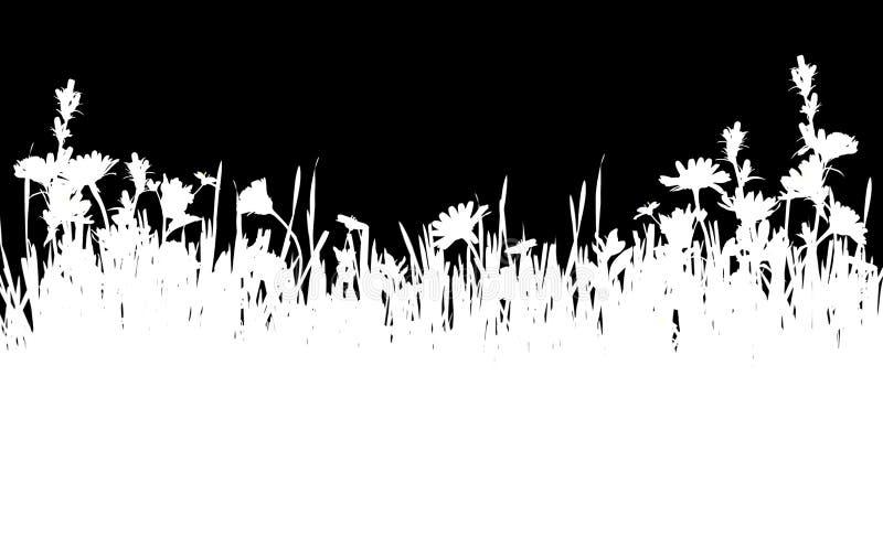 Silhueta branca da grama e da beira das flores selvagens ilustração stock