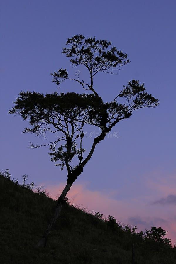 Silhueta crepuscular das árvores contra a luz fotografia de stock