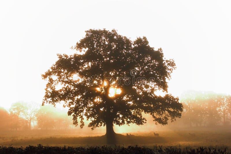 Silhueta da árvore imagens de stock royalty free