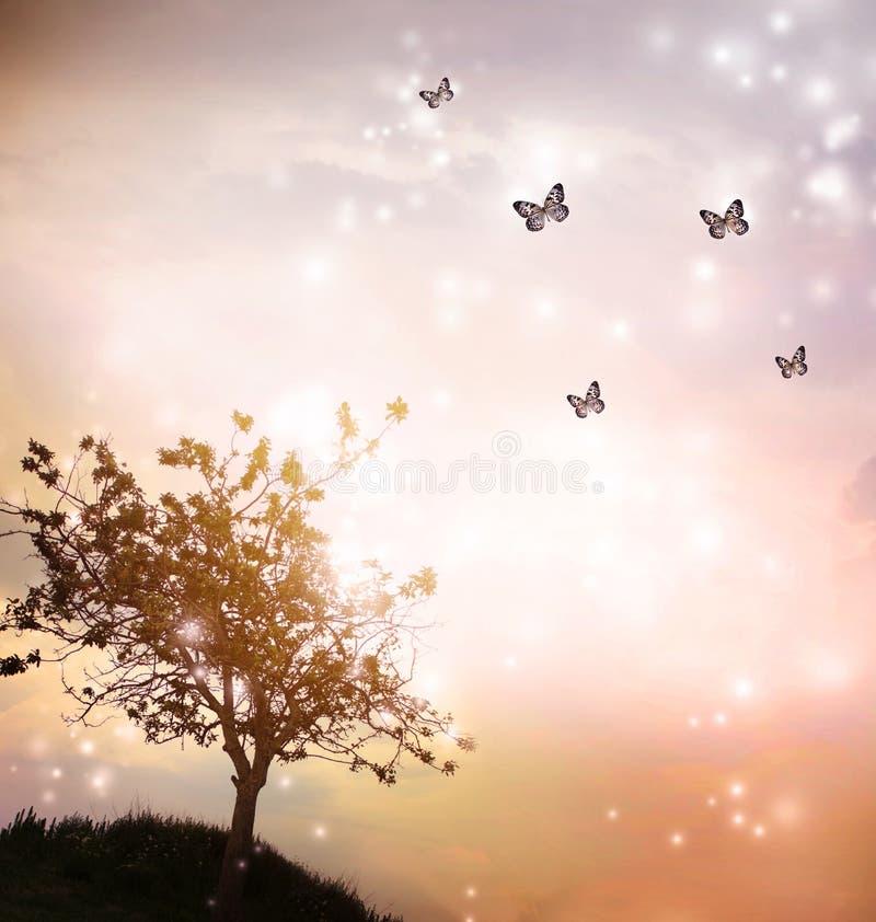 Silhueta da árvore com as borboletas no crepúsculo imagens de stock