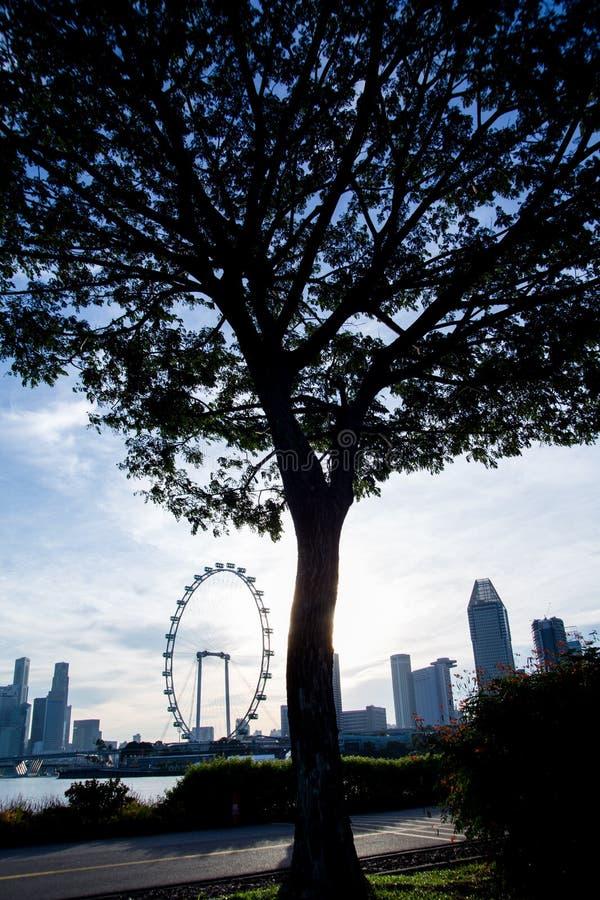 Silhueta da árvore com inseto de Singapura imagem de stock royalty free