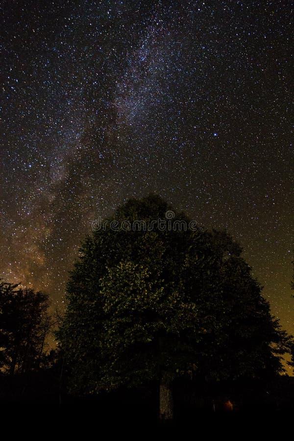 Silhueta da árvore da Via Láctea imagens de stock royalty free