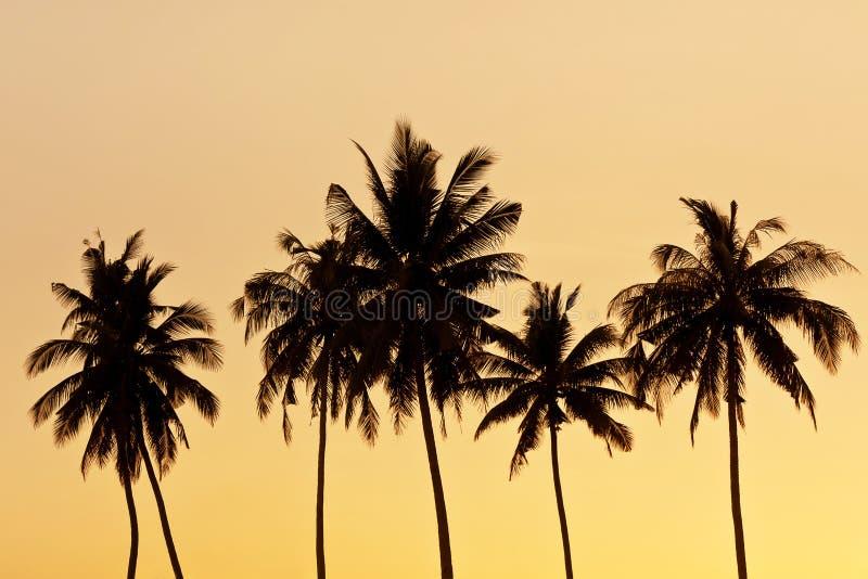 Silhueta da árvore de coco imagem de stock royalty free