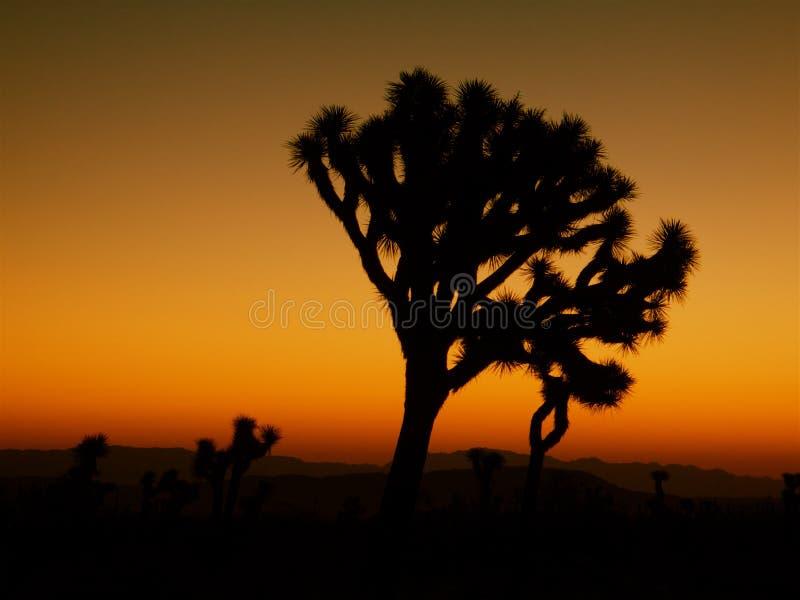 Silhueta da árvore de Joshua imagem de stock royalty free
